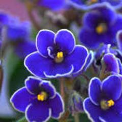 Океану Ельзи присвятили новий вид квітів (відео)