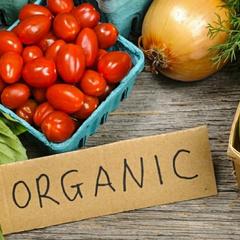 Україна нарощує експорт органічної продукції до ЄС