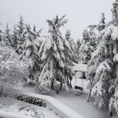 Завтра в низці областей України очікується сніг