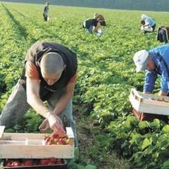 Польські заробітки лишають Україну без робочих рук - Bloomberg