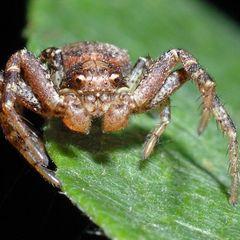 Біологи назвали найшвидшу істоту на Землі