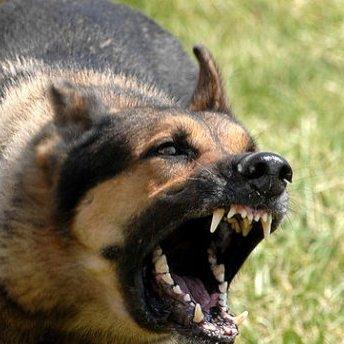 На Львівщині чоловіка на смерть загризли собаки