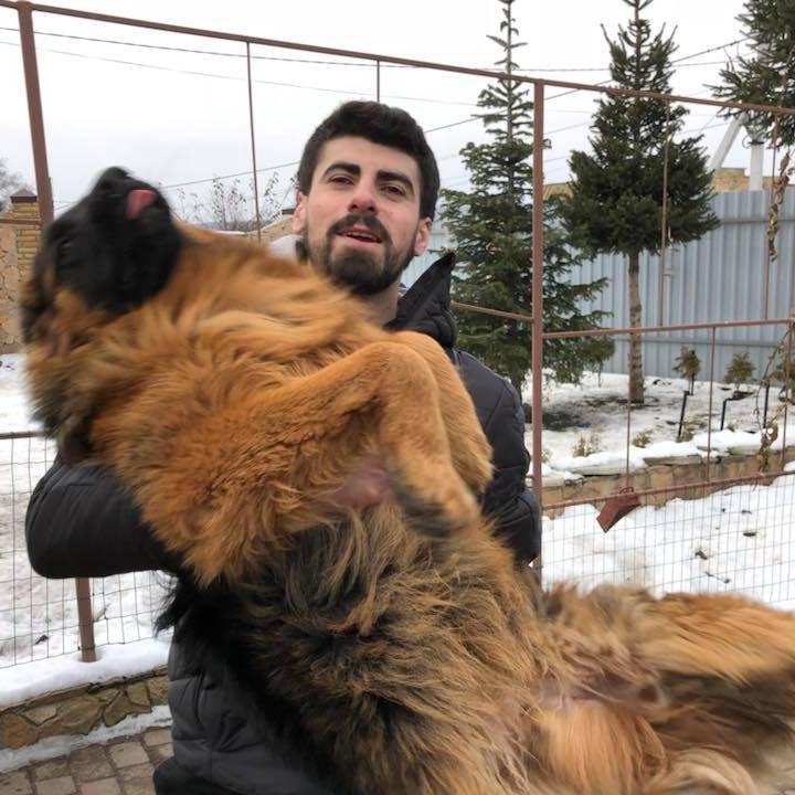 Зловмисників згубила жадібність: викраденого в новорічну ніч собаку нарешті повернули власнику (відео)