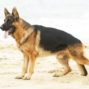 На окупованій території собаки насмерть розтерзали дитину