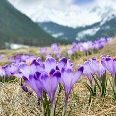Весна на порозі: 7 туристичних місць в Україні, які вражають квітами (фото)