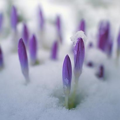 З 6 березня в Україні суттєво потепліє, - синоптик