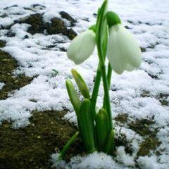 Як не захворіти на початку весни: медики дали поради