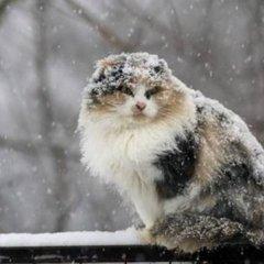 Снігопади, сильний вітер та налипання мокрого снігу: прогноз погоди на 3 березня