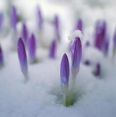 Погода на тиждень: в Україні потеплішає до +12