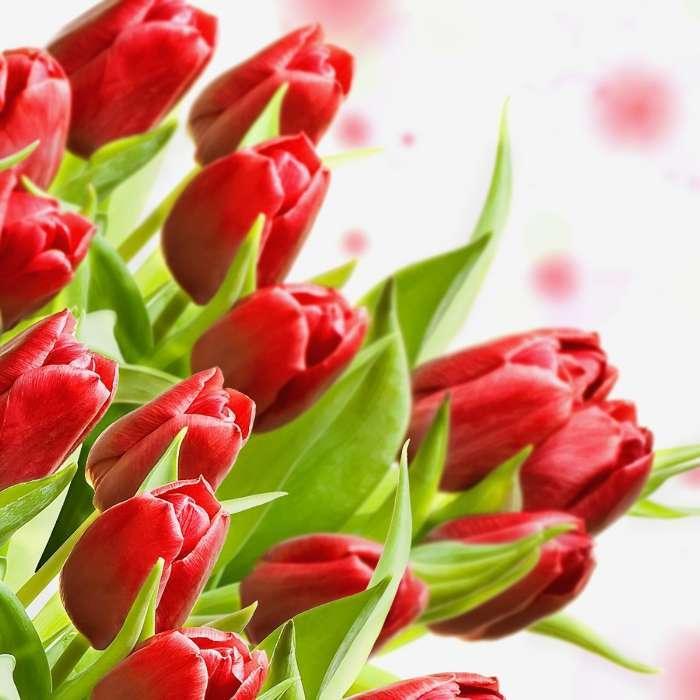 Чоловіки дарують квіти частіше, ніж цього хочуть жінки, – соціологи про 8 березня