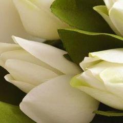 Підбірка віршів для привітання жінок із 8 березня
