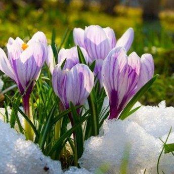 Прогноз погоди на 10 березня: сонячно на заході України та дощі на сході
