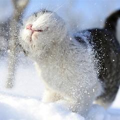 Синоптик розповіла, коли Україну знову накриють морози