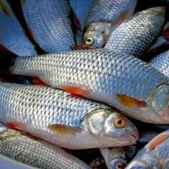 Науковці назвали 12 видів популярної їжі, яку не можна їсти