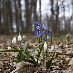 Кому треба відчути весну - краще це робити сьогодні і завтра, - синоптик
