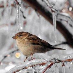 Якою буде погода в Україні в п'ятницю, 16 грудня