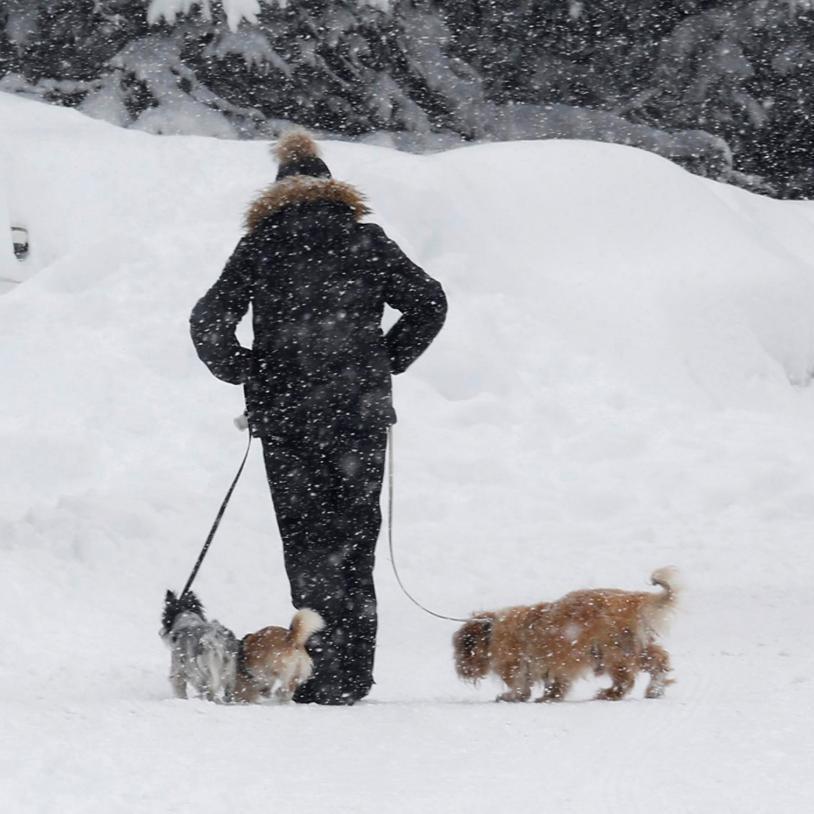 Синоптики сьогодні обіцяють холодну погоду та снігопади