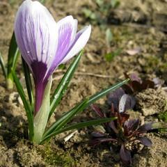 З 26-го березня скрізь почнеться потепління, - синоптик