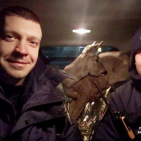 У Запорізькій області поліцейські врятували косулю (фото)