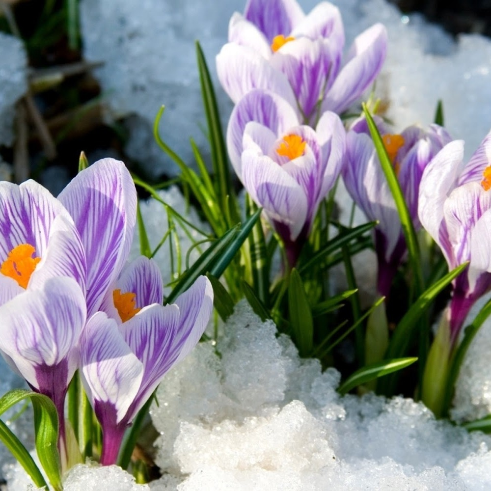 Погода: в Україні переважно сонячно, в центрі і на півдні - дощ