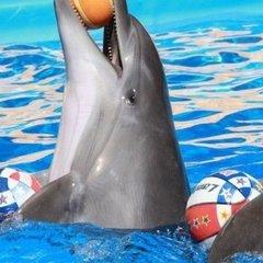 В Україні можуть заборонити дельфінарії