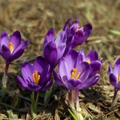 Прогноз погоди на 31 березня: в Україні потепліє, проте литимуть дощі