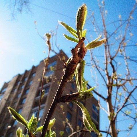 Погода на тиждень: в Україні потеплішає до +20, в деяких областях пройдуть дощі