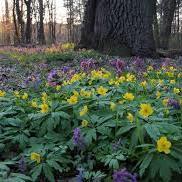 В Україні завтра буде сонячно, місцями до 22 градусів тепла