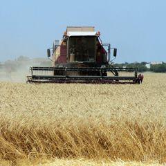 Українська земля має належати селянам, а не великим компаніям - Гройсман