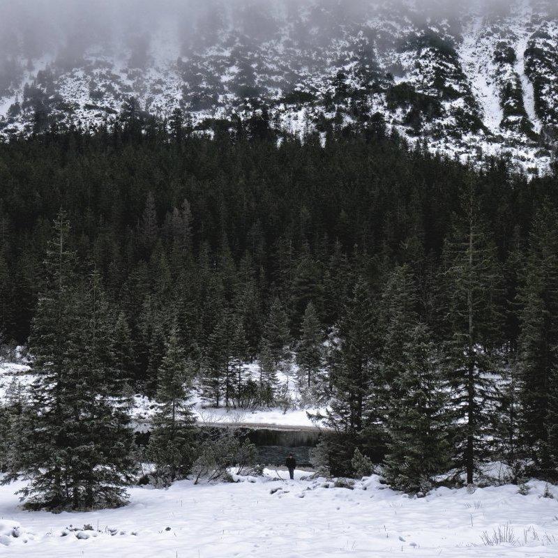 ВР попередньо ухвалила заборону рубок на гірських схилах Карпат