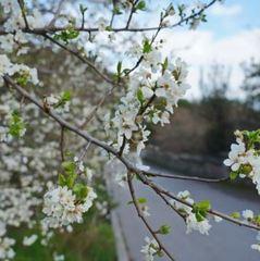 В Україні завтра температура знизиться до «весняних» показників, – синоптик