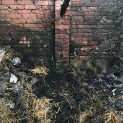 На Донеччині у пекельній пастці загинула 6-річна дівчинка