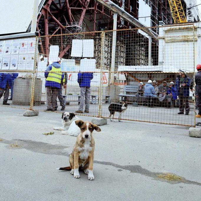 Американський «Фонд чистого майбутнього» допоможе бездомним собакам Чорнобиля