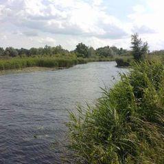 На Буковині на березі річки знайшли пакет із тілом немовляти