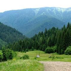 Від чого гинуть українські ліси – назвали причини