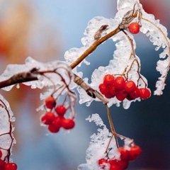 На Україну насуваються заморозки - подекуди до -5°