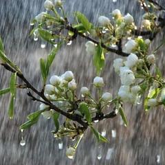 В Україні сьогодні пройдуть дощі, місцями температура до +23° (карта)