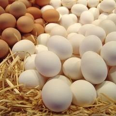 Україна стала лідером з експорту яєць в ЄС