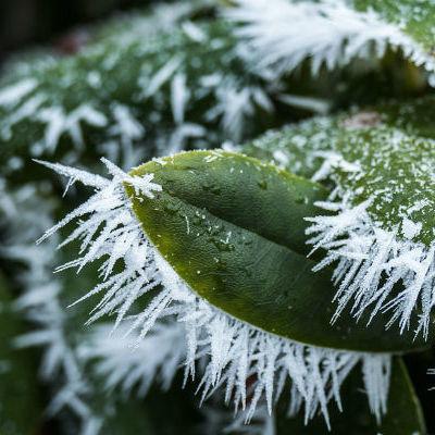Синоптики прогнозують заморозки в Україні на 28 квітня