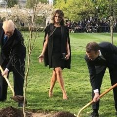 З-під Білого дому зникло дерево, яке посадили Трамп і Макрон