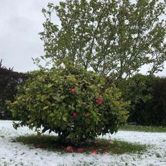В останній день квітня Францію засипало снігом (фото)