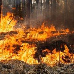 Рятувальники попереджають про надзвичайний рівень пожежної небезпеки в Україні