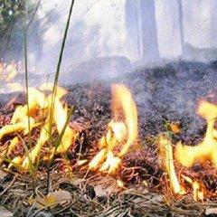 Рятувальники попередили киян про пожежну небезпеку