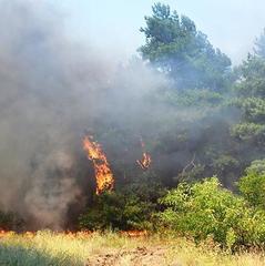 Надзвичайний рівень пожежної небезпеки в Україні протримається до 12 травня