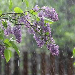 Погода на 9 травня: в Україні місцями пройдуть дощі, на сході температура до +27°