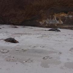 Під Маріуполем знайшли мертвих дельфінів (фото)