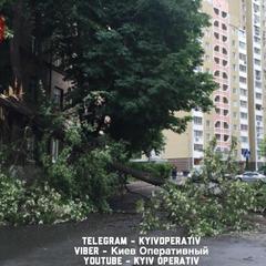 На Київ налетів шторм: вітер валить на дороги дерева (фото)
