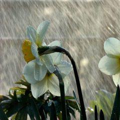 Погода: в Україні прогнозують дощі та холодний вітер
