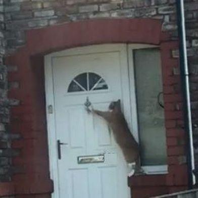 У Британії кота навчили стукати в двері (відео)