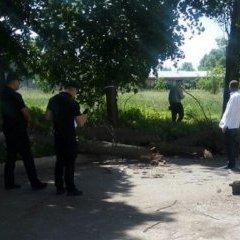 На чотирьох дітей в центрі Черкас впало дерево